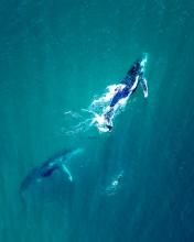 Noosa Whales - Australia