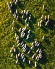 Kangaroo Island - Australia - Drone photo