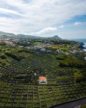 Biscoitos on Terceira - Azores (Portugal) - Drone photo