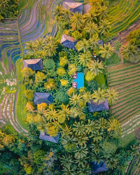 Clove Tree Hill in Bali, Indonesia