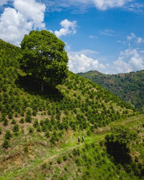 Finca Manchuria in Salgar, Colombia