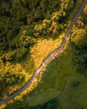 Campuhan Ridge Walk - Bali - Indonesia - Drone photo
