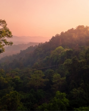Gibbon Experience - Laos