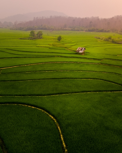 Lee 7 farm in Laos