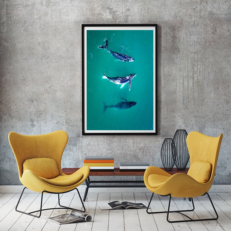 3 whales in Australia