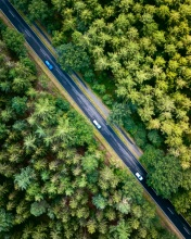Forest - The Netherlands - Drone photo